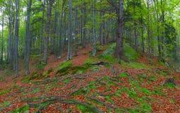 kolorowy jesień las Zdjęcia Royalty Free
