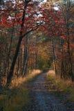 Kolorowy jesieni drewno na słonecznym dniu Fotografia Royalty Free