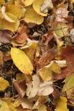 Kolorowy jesieni tło z spadkiem wielki pasmo colours obrazy stock
