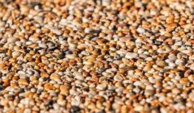 Kolorowy kamieni otoczaków tło Fotografia Stock