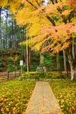 Kolorowy klon w świątyni Fotografia Royalty Free