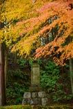 Kolorowy klon w świątyni Obraz Stock