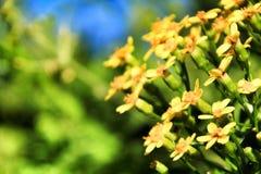 Kolorowy kolor żółty kwitnie pod niebieskim niebem w jesieni obrazy royalty free