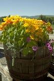 Kolorowy Kolorado Fotografia Stock