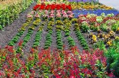 Kolorowy kolorowy kwiatu łóżko Fotografia Stock