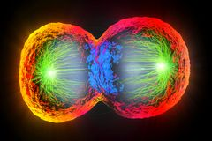 Kolorowy komórka podział komórki błona i rozszczepiać jądro, Fotografia Royalty Free