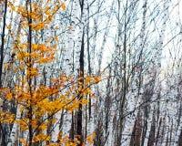 Kolorowy kontrast Fotografia Royalty Free