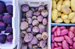 Kolorowy korzeniowy warzywo fotografia royalty free