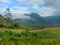 Kolorowy krajobraz Munnar, Kerala, India zdjęcia stock