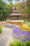 Kolorowy krajobrazowy widok kwiatu ogród i północny Thai sty Zdjęcia Royalty Free