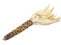 kolorowy kukurydzanego ucho indyjski biel Fotografia Stock