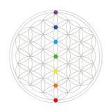 Kolorowy kwiat życie geometria ilustracja wektor