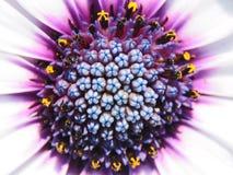 kolorowy kwiat Fotografia Royalty Free