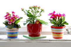 kolorowy kwiat Obrazy Stock