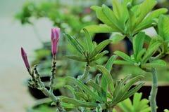 Kolorowy kwiat NA ogródzie zdjęcia royalty free