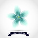 Kolorowy kwiat Odizolowywający na bielu Zdjęcie Stock
