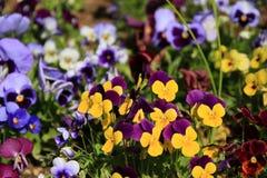 kolorowy kwiat ogród Fotografia Stock