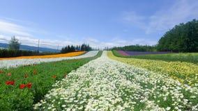 kolorowy kwiat pola Zdjęcie Royalty Free