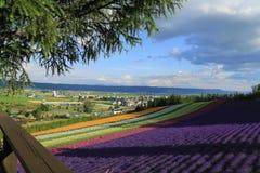 kolorowy kwiat pola Obraz Stock