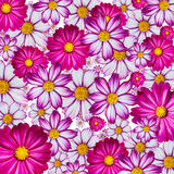 kolorowy kwiat tło fotografia stock