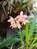 kolorowy kwiat tło obraz stock