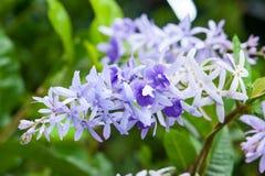 Kolorowy kwiat z kropli wodą Zdjęcie Royalty Free