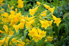 Kolorowy kwiat z kropli wodą Obraz Stock