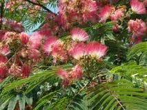 Kolorowy kwiatonośny drzewo Obraz Royalty Free