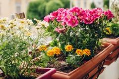 Kolorowy kwiatu dorośnięcie w garnkach Zdjęcie Stock
