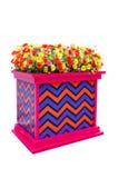 Kolorowy kwiatu krzak w kolorowym pudełku Zdjęcia Stock