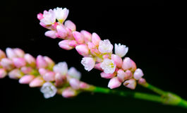 Kolorowy kwiatu okwitnięcie Odizolowywający na Czarnym tle Fotografia Stock