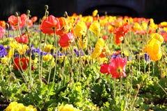 Kolorowy kwiatu pole Zdjęcie Stock