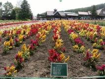Kolorowy kwiatu pole w północy podczas jesieni Zdjęcie Royalty Free