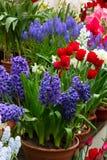 Kolorowy kwiatu sklep Zdjęcia Royalty Free