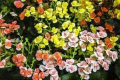 Kolorowy kwiaty z zielonym liściem Fotografia Royalty Free