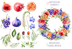 Kolorowy kwiecisty i owoc inkasowi z orchideami, kwiatami, liśćmi, granatowem, winogronem, pomarańcze, figami i jagodami, royalty ilustracja