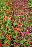 Kolorowy kwitnący ogród, kwiatów lato pełność obrazy royalty free