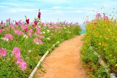 Kolorowy kwitnienie kwitnie w ogródzie Obrazy Royalty Free