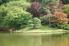 Kolorowy las Obraz Royalty Free