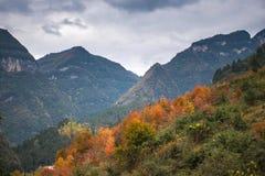 Kolorowy las góry fotografia stock