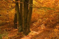 Kolorowy las przy jesienią fotografia stock