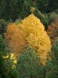 Kolorowy las w Wilczej zatoczce Oregon obraz royalty free