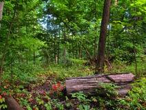 Kolorowy Lasowy dzień Obrazy Royalty Free