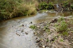 Kolorowy lasowy strumień Fotografia Stock