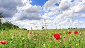 Kolorowy lata pole z kwiatami kiwa w wiatrze zbiory