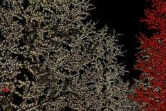 kolorowy lekki drzewo Obraz Royalty Free