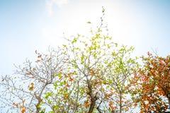 Kolorowy liść obrazy stock