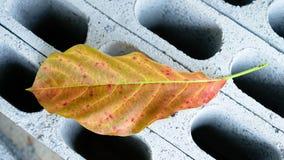 kolorowy liść Obraz Stock