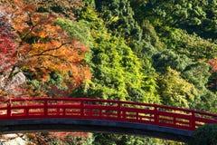 Kolorowy liść i czerwień most w jesieni przy Japan Fotografia Royalty Free