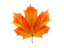 Kolorowy liść klonowy odizolowywający na białym tle zdjęcie stock